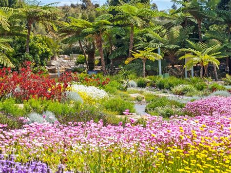 Mount Annan Botanical Gardens The Australian Botanic Garden Mount Annan Camden Attraction