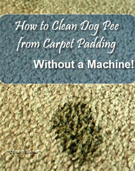 how to clean rugs without a shooer condo blues how to clean from carpet without a carpet cleaning machine
