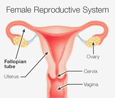 diagram of fallopian and uterus tubal cannulation procedure risks benefits reasons