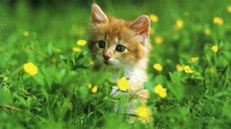 wallpapers for desktop kittens cute kittens download wallpaper hd free wallpapers car of