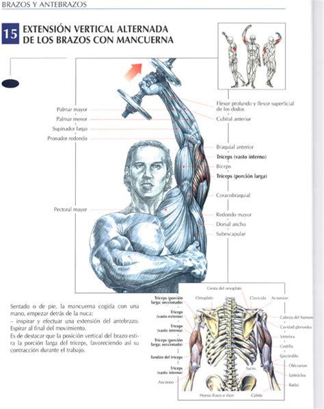 tabla de ejercicios con mancuernas para hacer en casa ejercicios triceps fotos musculaci 243 n y pesas