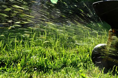 put grass in backyard are grass clippings good for my lawn lawn doctor blog