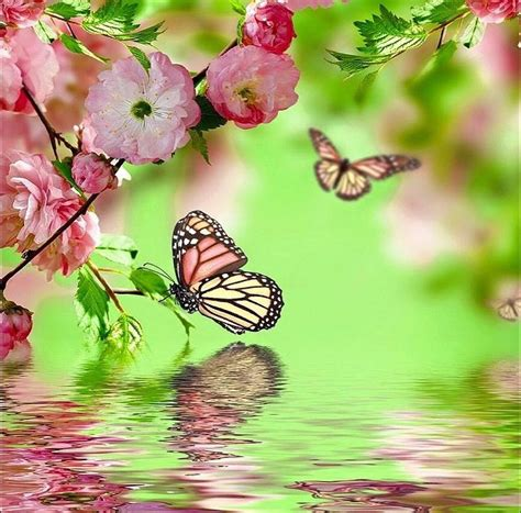 butterfly in water photograph by eleni salony