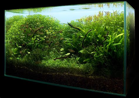 Nano Aquascaping by Nano Aquascape Mystic 15l Aquascaping World Forum
