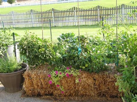 using straw in vegetable garden using straw bales for gardening tucson