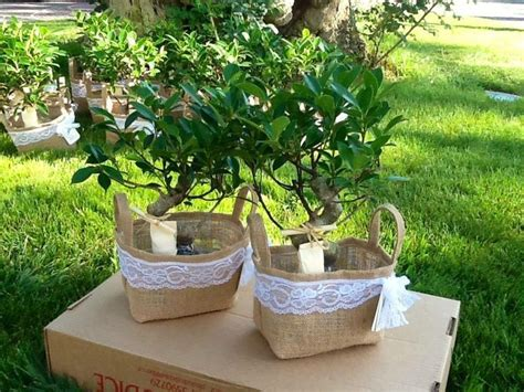 Bonsai Wedding Giveaways - bomboniere a collection of ideas to try about weddings bonsai wedding favors and