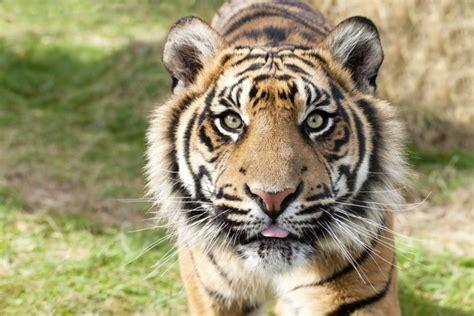imagenes animales en peligro de extincion im 225 genes de animales en peligro de extincion animales hoy