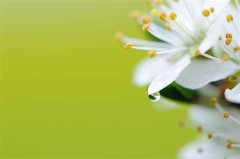 fiori di marzo primi fiori di marzo juzaphoto