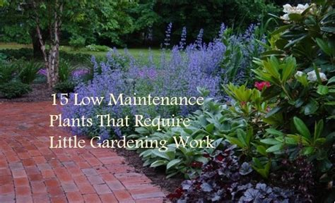 15 Low Maintenance Plants That Require Little Gardening