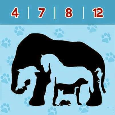 picture this how pictures interesting brain teasers to challenge your mind