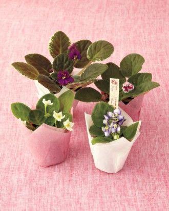 Bunga Artfcl Mini Violet 187 best images about violets pot ideas on miniature tea cups and saintpaulia