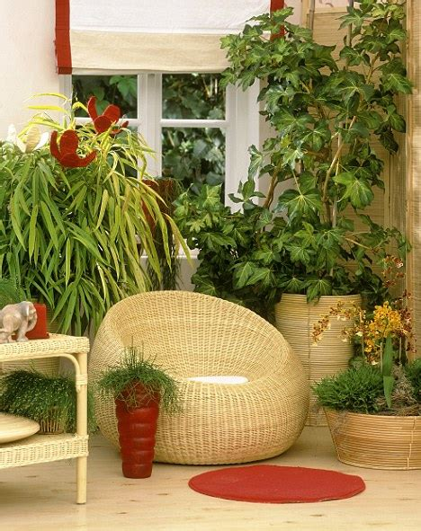 Best House Plants For Window How To Keep Your Houseplants Happy Follow Our Five Point
