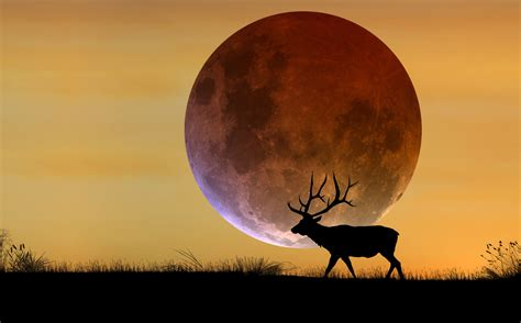 The Hunters Moon a total eclipse of the harvest supermoon farmers