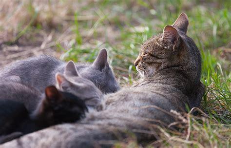 alimentazione gattini 2 mesi come alimentare cuccioli e gattini da appena nati ad adulti