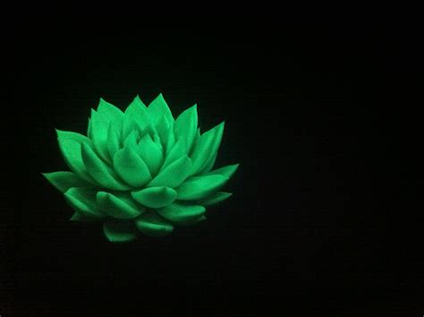 glow in the dark plants glow in the dark plant mwpd mooiwatbloemendoen pinterest