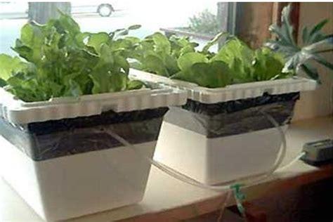 vasca idroponica coltivazione idroponica breve guida orto di casa