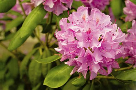 list of state flowers list of the beautifully blooming u s state flowers with