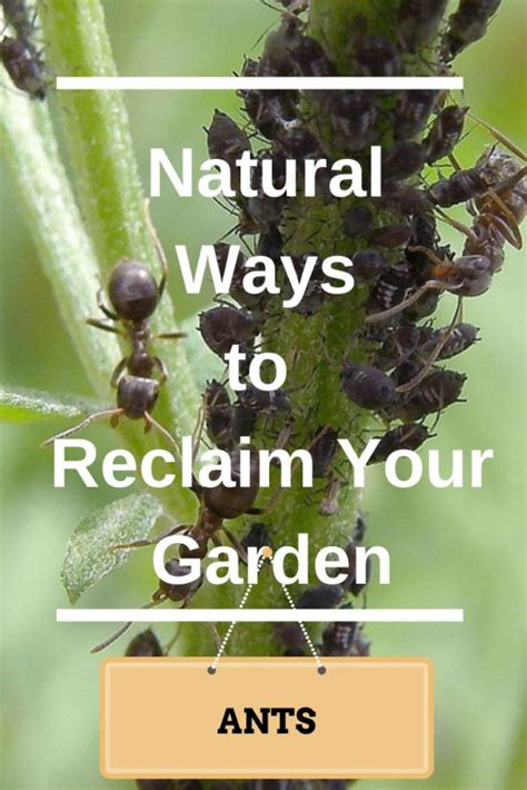 How To Get Rid Of Ants In Vegetable Garden by Ways To Get Rid Of Ants In Your Vegetable Garden