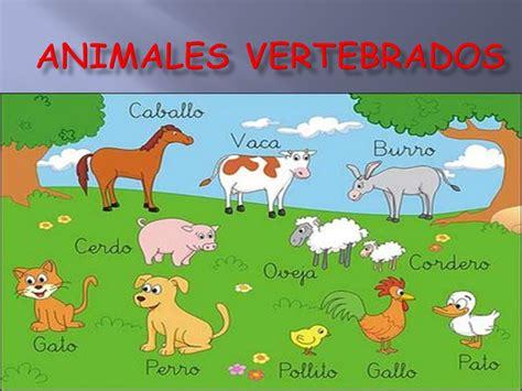 los animales vertebrados los animales vertebrados los animales vertebrados