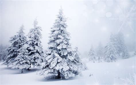 wallpaper winter snow tree spruce bokeh desktop
