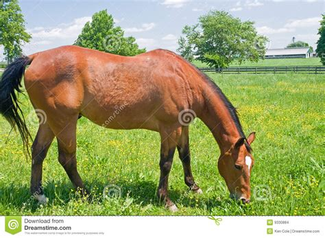 bright pasture susan cole photography brown in pasture stock images image 9330884