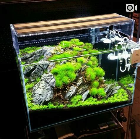 Simple Aquascaping Ideas by 1000 Images About Aquascapes On Planted Aquarium Plants And Layout