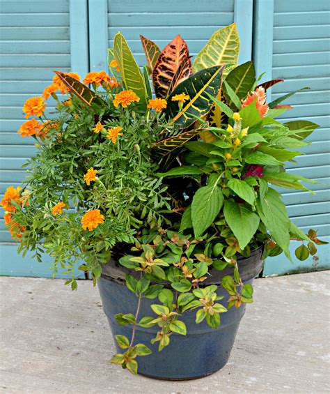Plant Combination Ideas For Container Gardens 4 Container Garden Ideas Fairview Garden Center