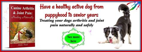 canine laser therapy for arthritis laser therapy for dogs canine arthritis and joint