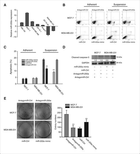 resistor normalized values microrna 200a promotes anoikis resistance and metastasis by targeting yap1 in human breast