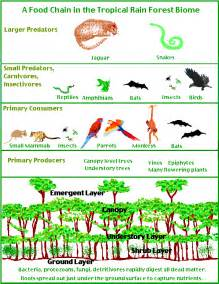 Image of a food chain of tropical rain forest