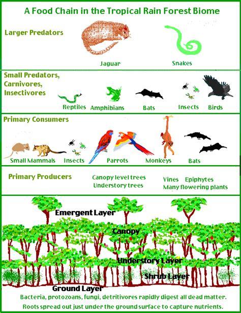forest food chain diagram world builders 1 biomes unit grasslands food web e viau csula