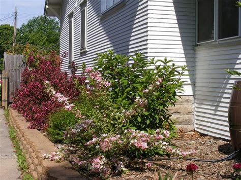 plants for side of house bushes for side of house 28 images the essential steps to landscape design diy