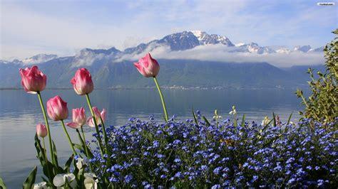 Flower Mountain mountain pink flowers wallpaper mountain flowers