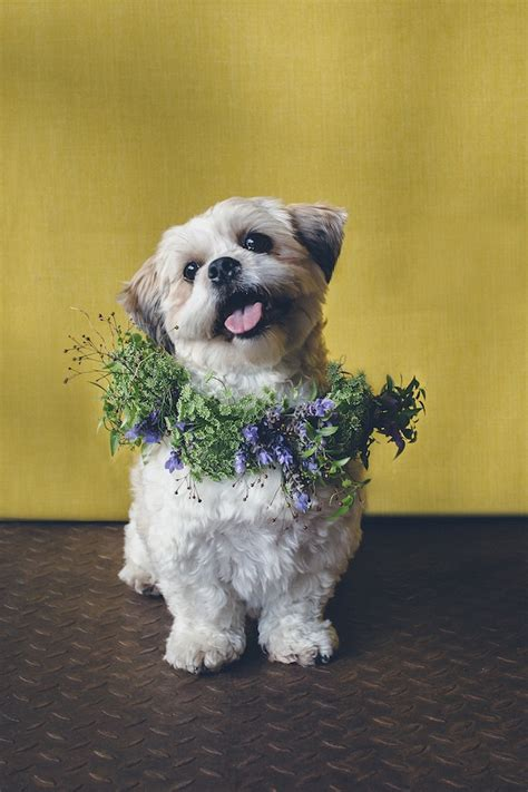 puppy with flowers dogs in flower crowns flower crowns crown and