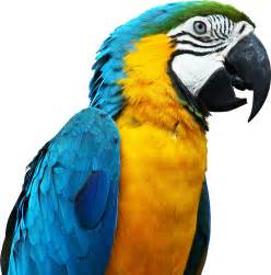 Blue parrot png image free download