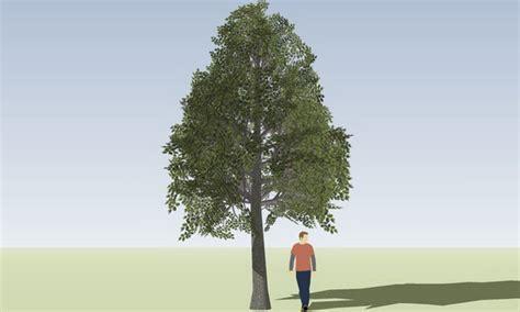 warehouse tree sketchup components 3d warehouse tree