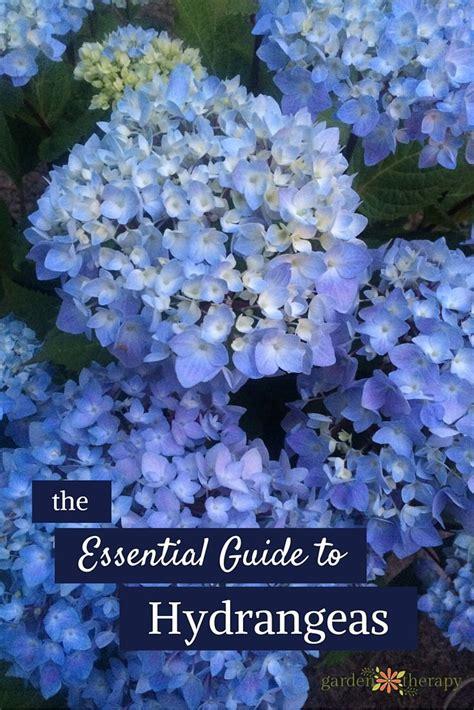 flower gardening tips the 25 best flower gardening ideas on flowers