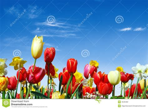 imagenes varias com diverse de lentebloemen naar de blauwe hemel stock