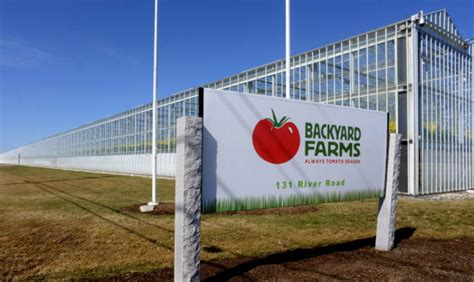 backyard farms maine canadian greenhouse giant buys maine tomato grower
