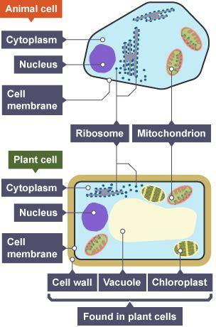 bbc bitesize gcse biology levels  organisation