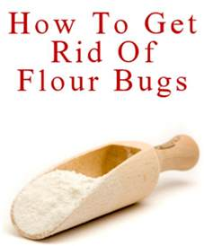 How To Get Rid Of Pantry Pests pantry pests getting rid of flour bugs tipnut