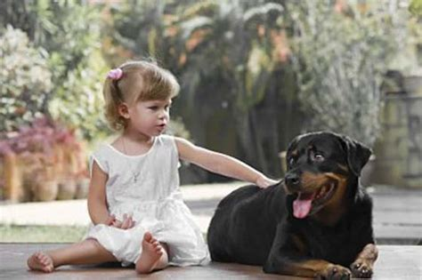 rottweiler as family dogs the rottweiler your family s best friend pets