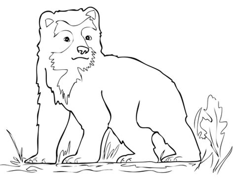 coloring page bear cub spectacled bear cub coloring page free printable