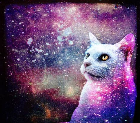 wallpaper galaxy cat galaxy cat by skinagainstface on deviantart
