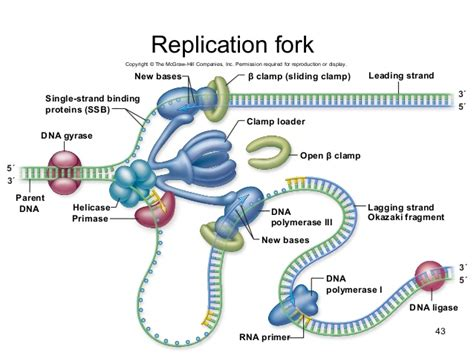 fletch the fork goes on the left books dna replication mcgraw hill animation go search