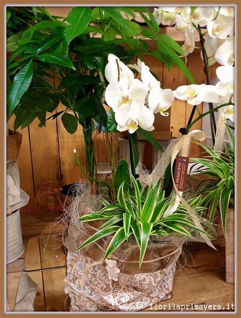 fiori a domicilio brescia oggi in negozio fiori la primavera consegna fiori a