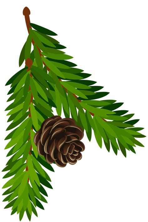 transparent pine branch  cone png art gallery yopriceville high quality images