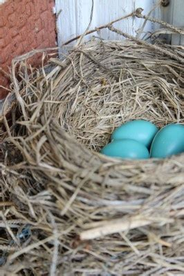 8 best images about robins egg blue on pinterest