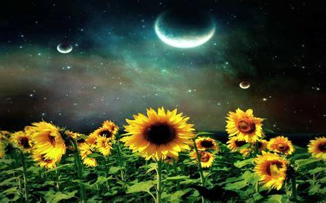 hd sunflower night wallpaper