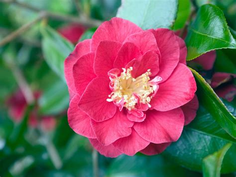 shrubs that flower in winter plants for winter color winter garden design hgtv